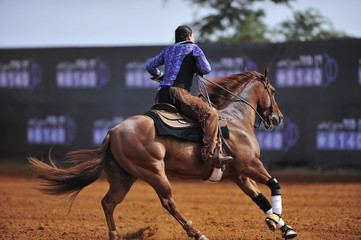 The rider on horseback
