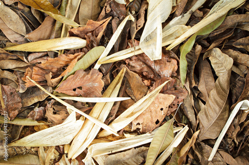 Deurstickers Droogte Different dried leaf on ground.