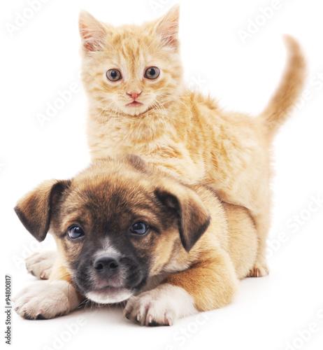Rred kitten in puppy.
