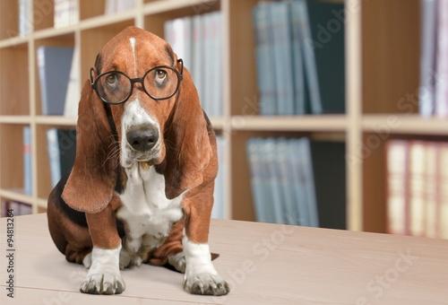 Zdjęcia Dog.