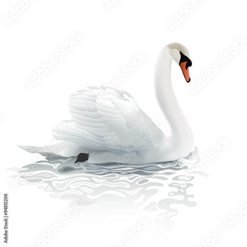 Swan. Hand drawn vector illustration of a mute swan resting on the surface of a rippled water, surrounded by bright morning light.
