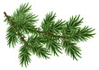 Obrazy na płótnie, fototapety, zdjęcia, fotoobrazy drukowane : Fur-tree branch. Green fluffy pine branch