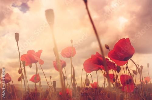 Staande foto Klaprozen poppies