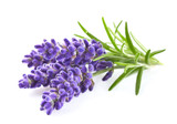 Lavender - 94867090