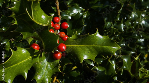Red Berries And Green Leaves Royalty Free Stock Photos ...