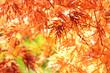 Herbst 109