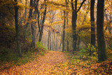Autumn forest road scene