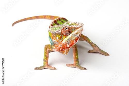 Fotobehang Kameleon Chameleon on a white background