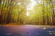 Obrazy na płótnie, fototapety, zdjęcia, fotoobrazy drukowane : Forest road in autumn