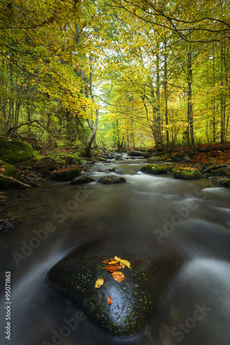 In de dag Bos rivier Autumn landscape on a mountain river