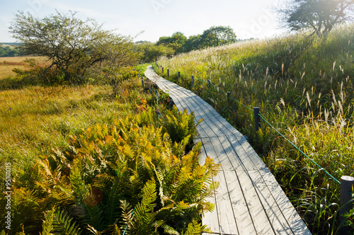 Poster Walkway of wetlands that were made by wood