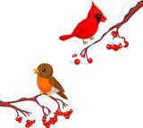 Cute cartoon robin bird and cardinal bird on the berry tree