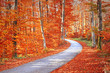 Red and gold color saturated sunny autumn season forest with beautiful winding asphalt road. Magical oversaturated autumn forest tree leaves.
