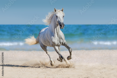 Horse run against the ocean плакат