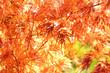 Herbst 108