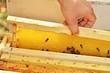Obrazy na płótnie, fototapety, zdjęcia, fotoobrazy drukowane : abeilles