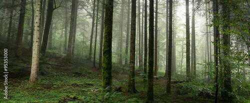 sous bois dans la brume - 95353000