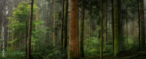 Dans un sous bois tronc de sapin avec et sans mousse - 95353064
