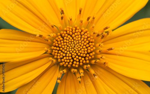obraz lub plakat Macro Flower