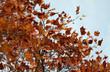Herbst - Bunte Laub im Garten