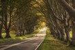 roleta: Beautiful vibrant road in Autumn Fall landscape forest countrysi