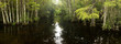 Panorama of cypress forest and creek through swamp in Florida's Everglades