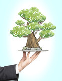 A hand in formal suit holds a tablet with a sketched tree. Light blue background. A concept of mature business.