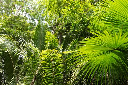 amazon-rainforest-brazylia