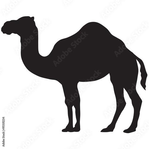 Fototapeta camel silhouette-vector