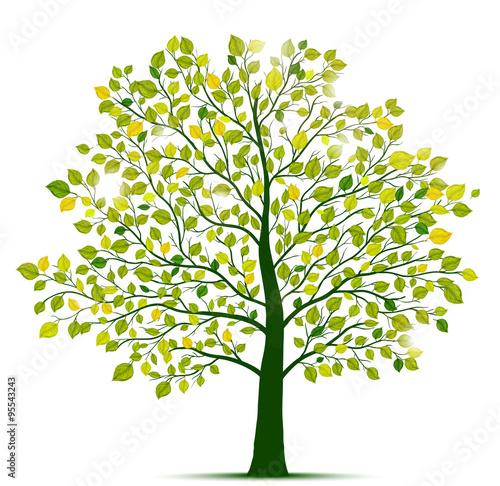 Zdjęcia na płótnie, fototapety, obrazy : green tree isolated