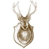 engraving stuffed reindeer head on white background