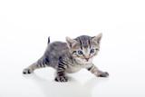 Gatito con las patas abiertas