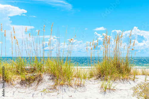 sunny beach with sand dunes and blue sky Poster