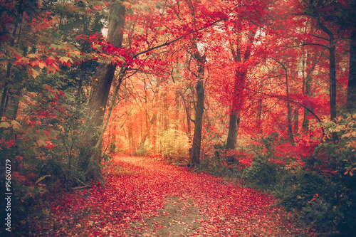 obraz lub plakat Magical forest with autumn colors and red leaves