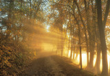 Fototapety Sonnenstrahlen im Spätherbst