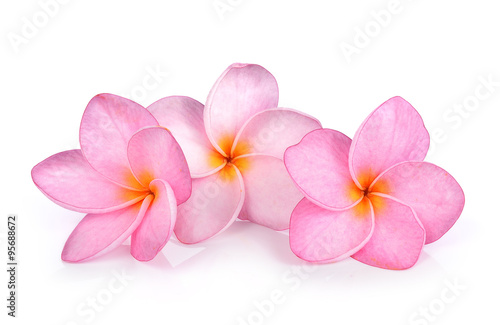 Fotobehang Plumeria Plumeria on white background