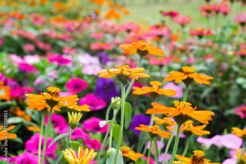 """colorful daisies in grass field with white background ..."