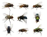 Fototapety  fly on white