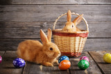 Fototapety rabbits with Easter eggs on wooden background
