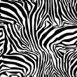 Zebra Stripes . Background. Pattern. A seamless pattern.