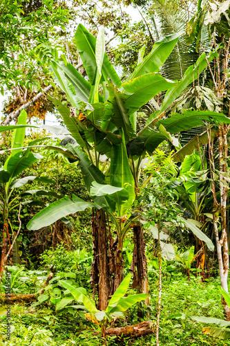 Foto op Plexiglas Landschappen Amazon Plants, Ecuador