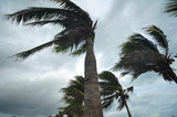 palms at hurricane - 95847409