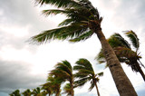 Palm tree at the hurricane, Blur leaf cause windy and heavy rain - 95853099