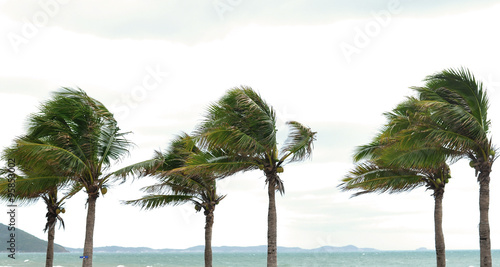 Palm tree at the hurricane, Blur leaf cause windy and heavy rain - 95853002