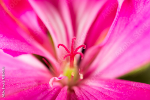 Foto op Aluminium Roze pink flower in nature