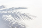 ombre de palme de cocotier sur plage des Seychelles - 95903642