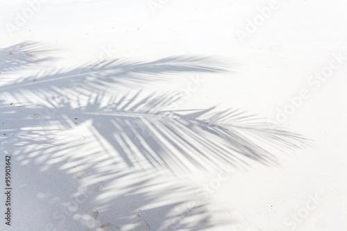 ombre de palme de cocotier sur plage des Seychelles Poster