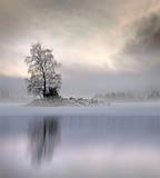 Bare tree in foggy landscape - 95909443