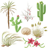 Set of Steppe and Desert Plants