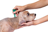 tick and flea prevention for a dog - 95972687